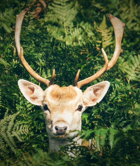 look-into-a-wildlife