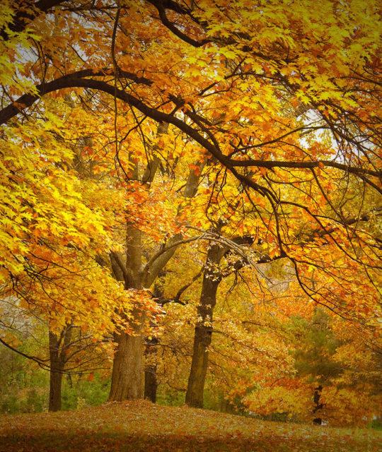 winter-fall-in-nyc